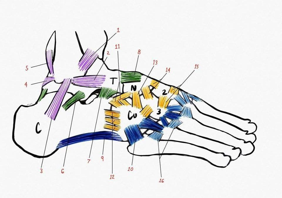 Do Your Feet Speak to You? Foot Anatomy