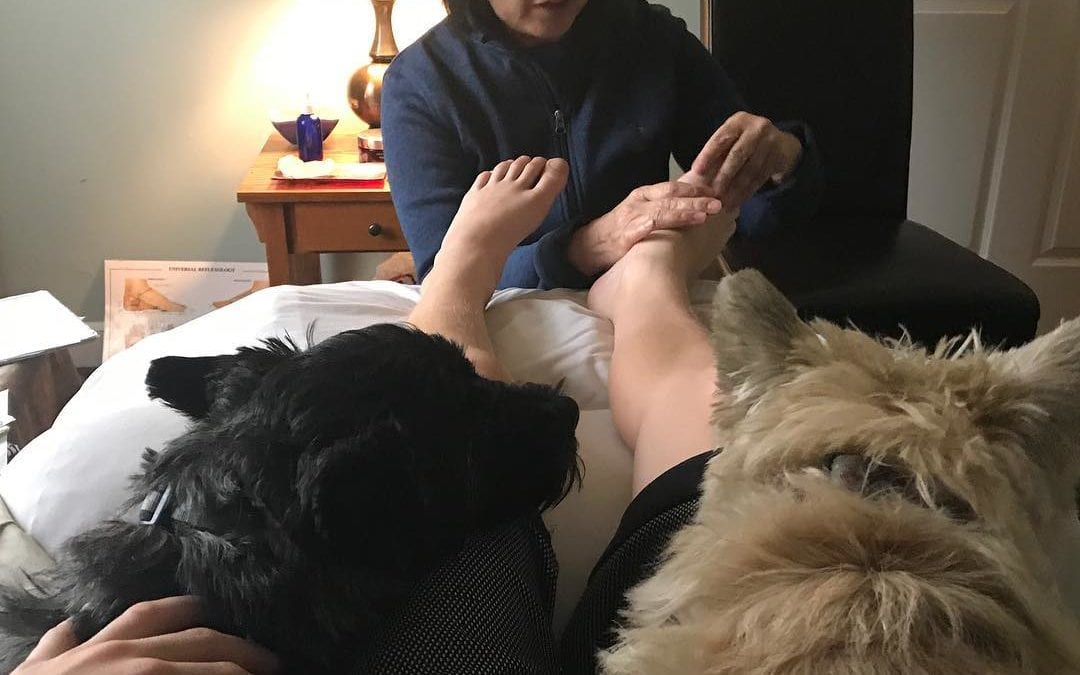 A day in a life of a #reflexologist #reflexology #energyhealing #energy #cairnterrier #holistic