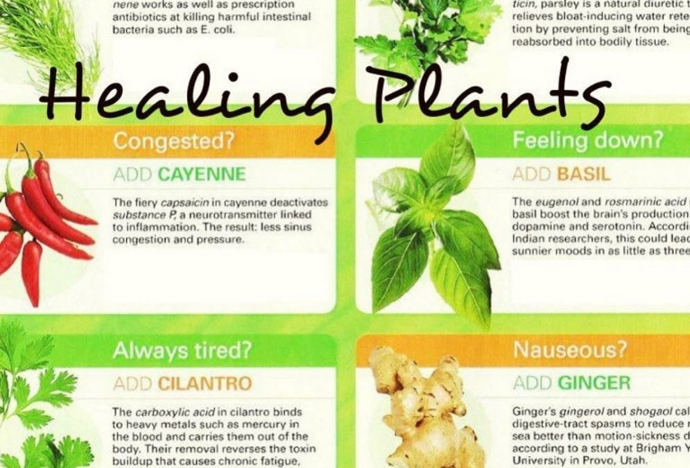 How much of this list of healing plants do you put into your food? I use #ginger #basil #cilantro and #parsley quite a bit. These herbs will aid in #digestion #foodismedicine #energymedicine #energyhealing #mindfulness #reflexology #abundance #peace #mindbodyspirit #chakras #healingplaceenergyschool #healingplacemedfield #reflexologyqueen. The Healing Place helps people to break painful digestive cycle with reflexology. For more information call 508-359-6463.